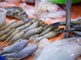 巴沙鱼冻鱼/水产品进口前期,国外企业需要满足哪些基本条件